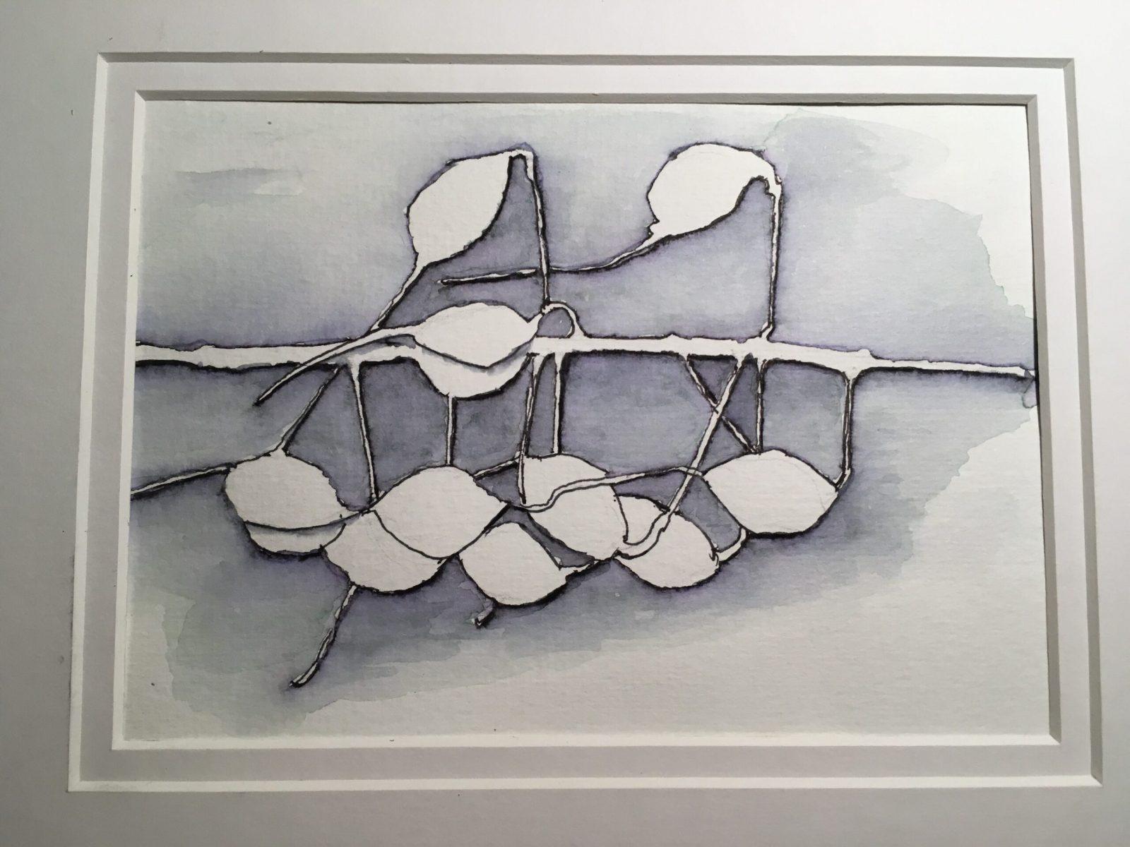 Nancye Davison - Seed Pods