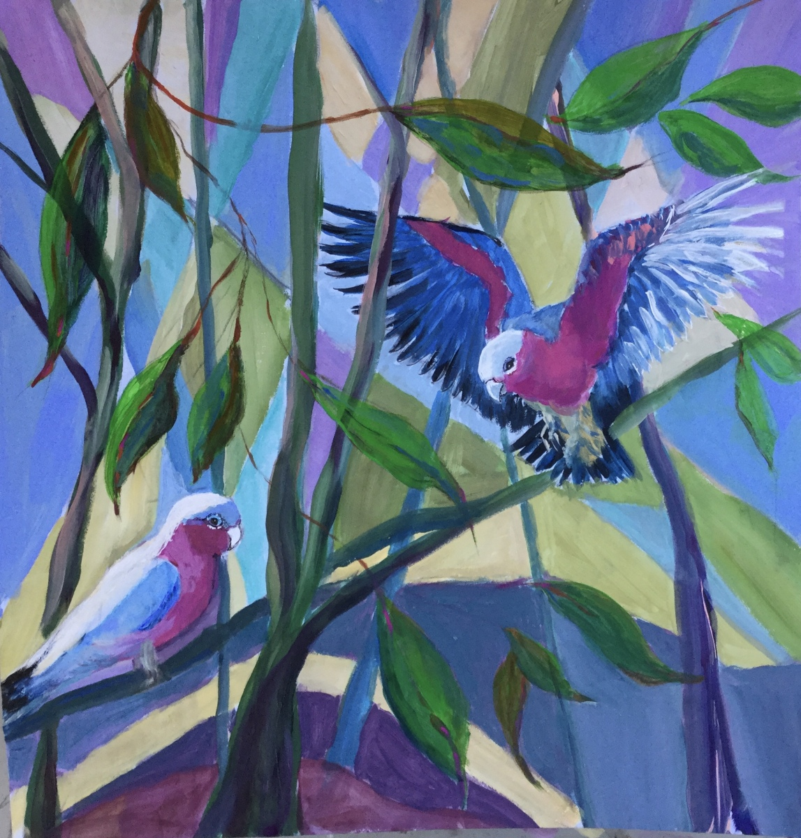 Rosemary Morgan - Pink Galahs