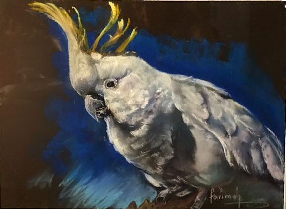 Farimah Eshraghi - White Cockatoo