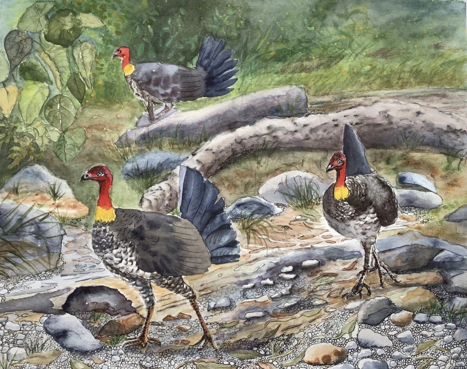 Rosemary Morgan - Bush Turkeys