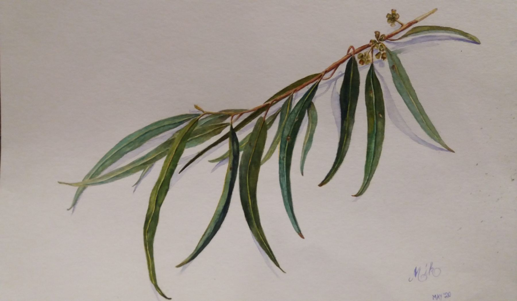 Monika McCallum - Wonthaggi Wetlands Eucalyptus Leaves