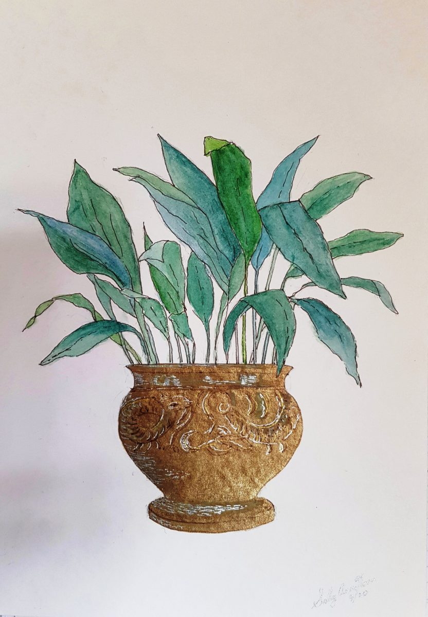 Sally Ann Glenn - Aspidistra in Brass Pot