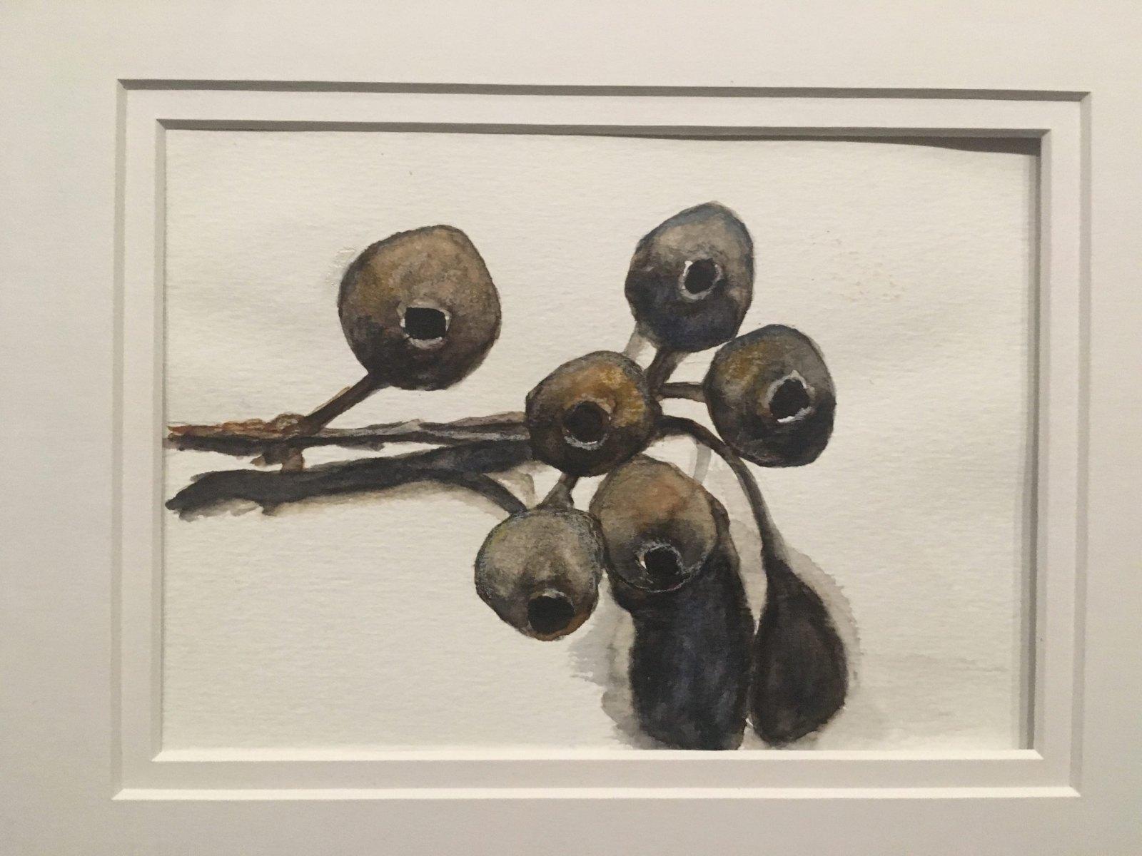 Nancye Davison - Gum Nuts