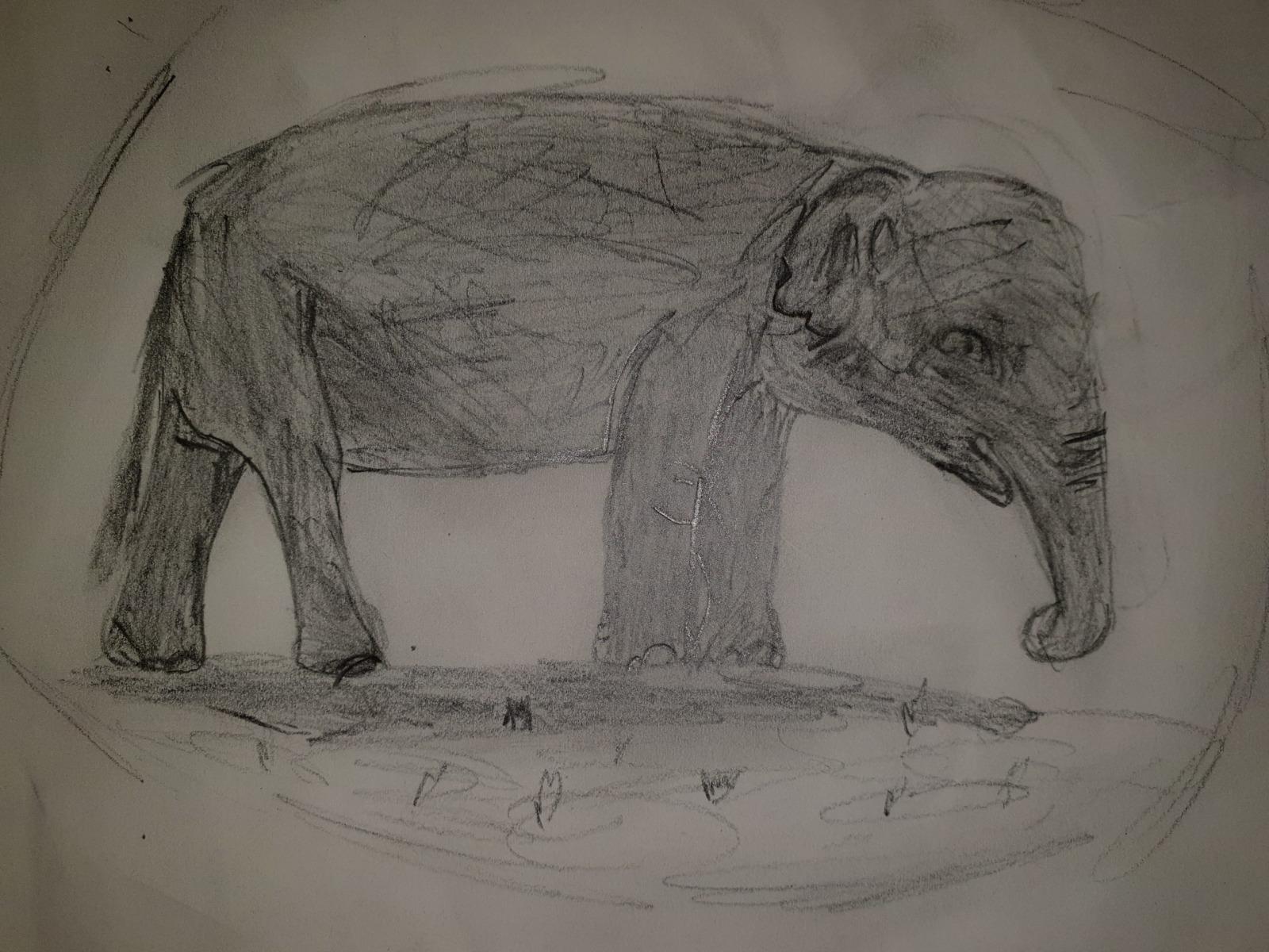 David - Age 11 - Elephant