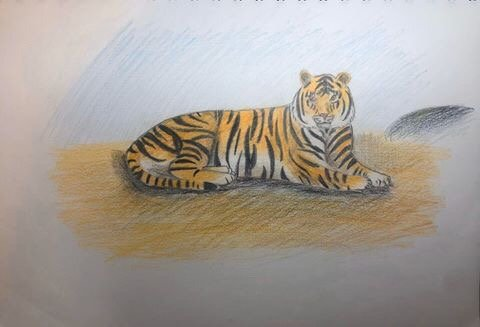 Emily - Age 10 - The Amazing Tiger