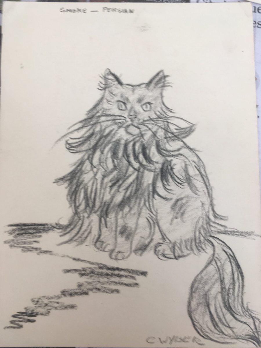 C. Wyber - Age 14 - Cat