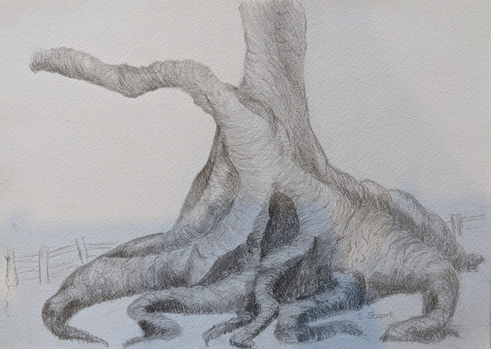 Sheryl Stuart - Nofolk Island