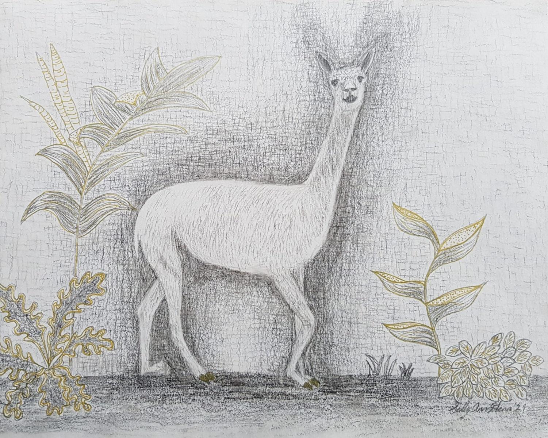 Alpaca 1 - Sally Ann Glenn