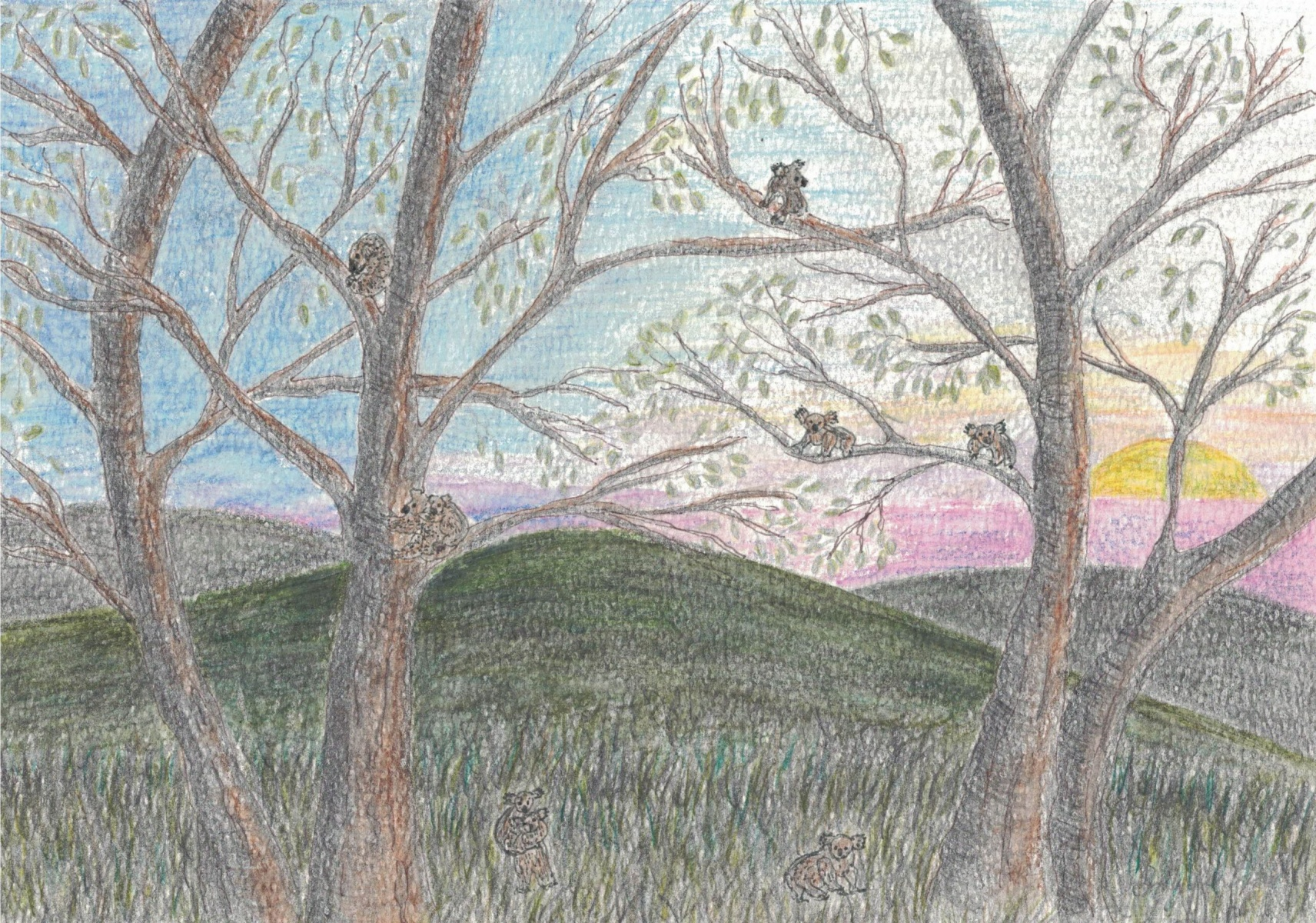 Koala Country - Sally Ann Glenn